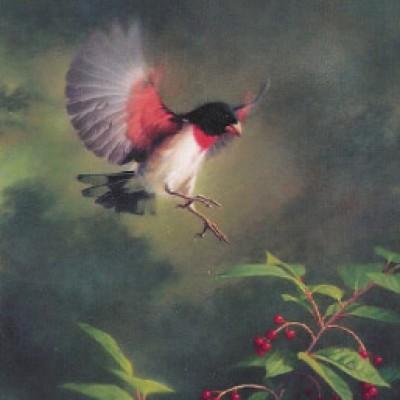"""Rose Breasted Grosbeak"" - 1999 Poster"
