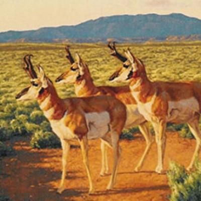 """""""Prong-Horned Antelope"""" - 2000 Poster"""